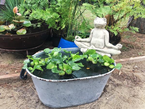 giardini d'autore piante acquatiche