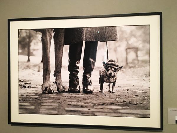 foto cani ellitt erwitt