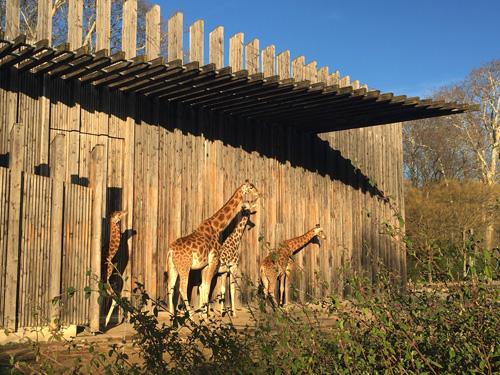 giraffe parc de la tete d or lione