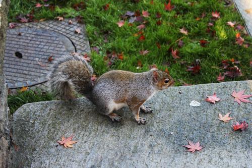 scoiattoli Parco del Valentino