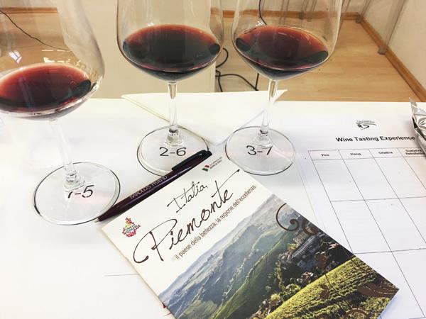 wine tasting experience alba
