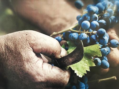 l'essenza del vino vinitaly