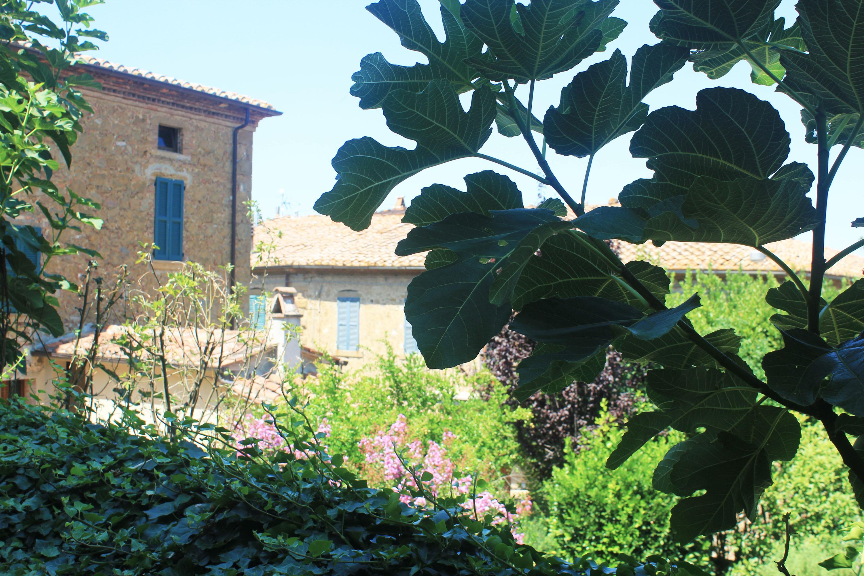 montepulciano e dintorni: castelmuzio
