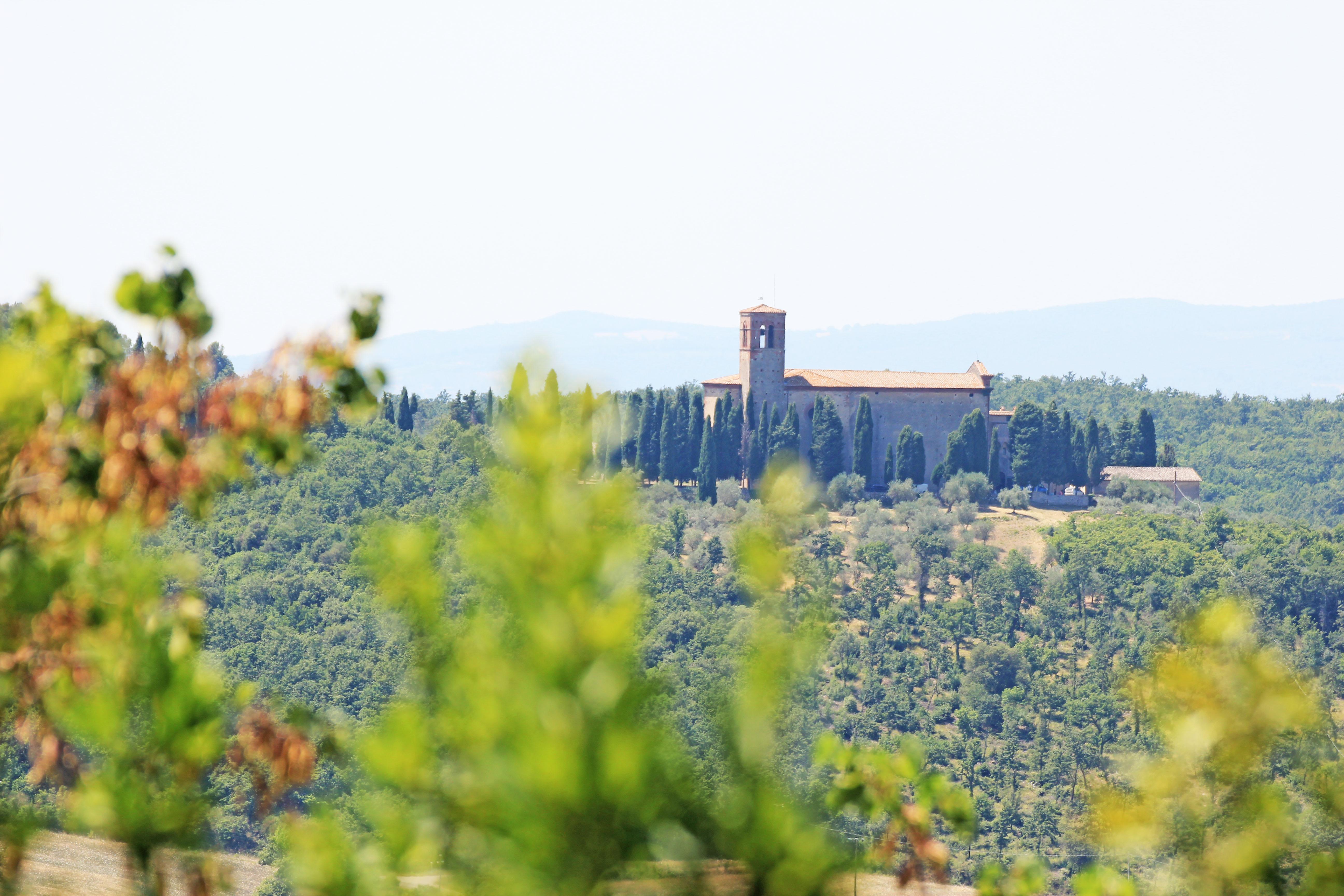 montepulciano e dintorni: la valdichiana senese