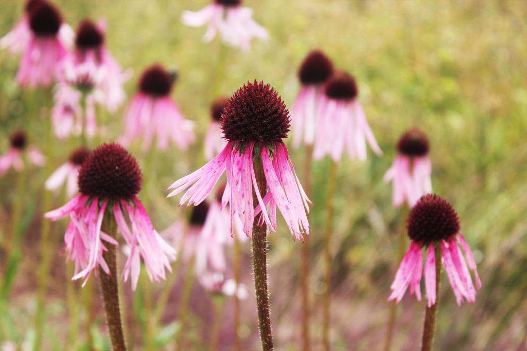 piante aromatiche emilia romagna