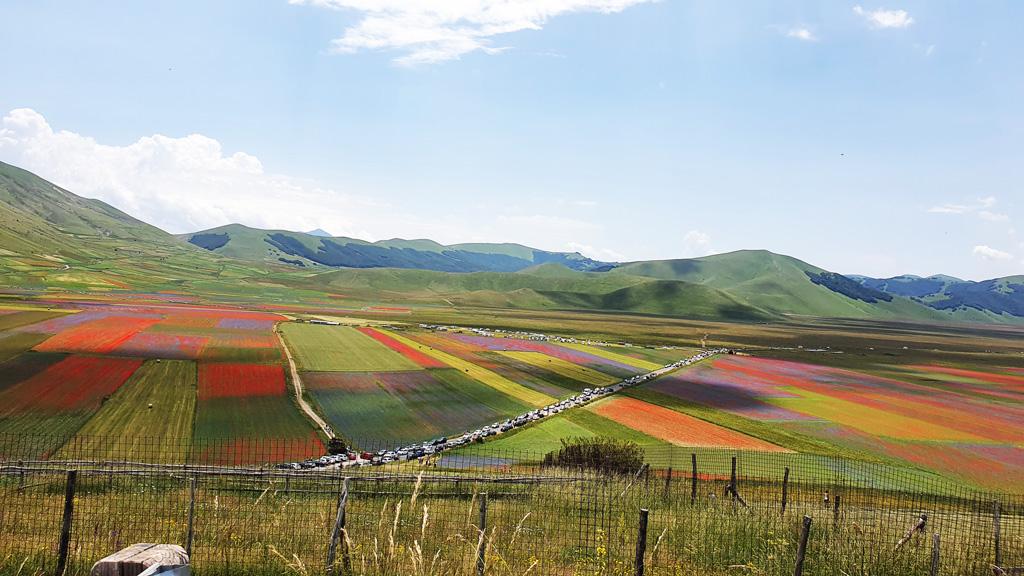 la fioritura delle lenticchie castelluccio